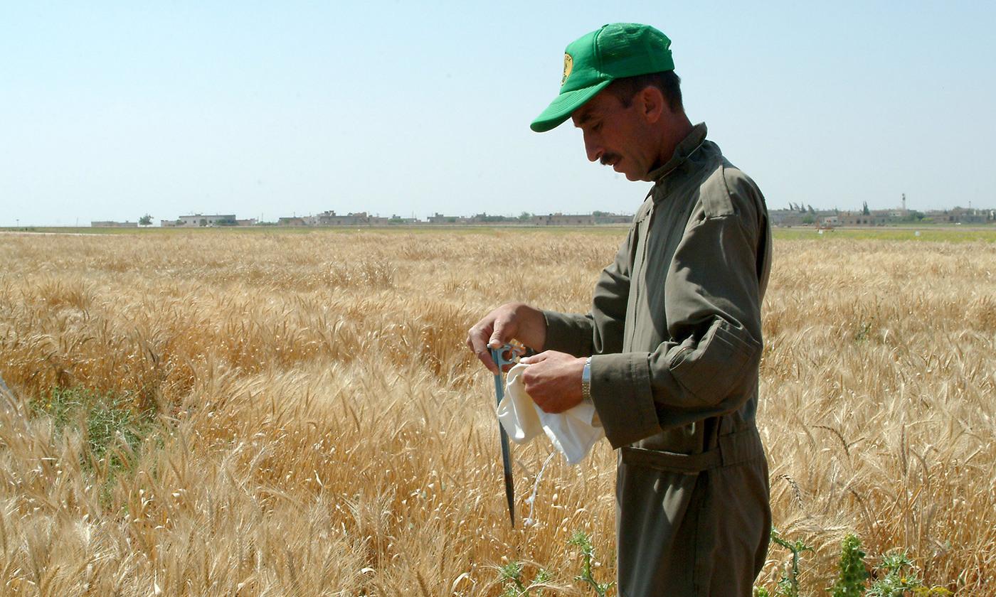 <em>Photo courtesy  ICARDA-Science for Better Livelihoods in Dry Areas</em>