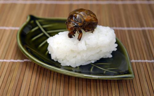 Insectophilia | Aeon