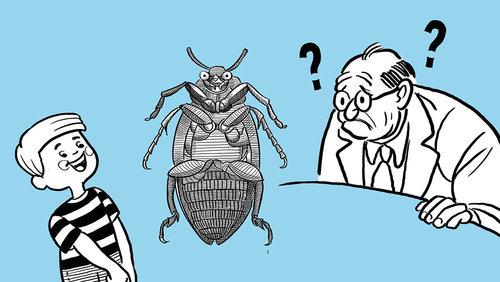 Card wittgenstein beetle in a box main