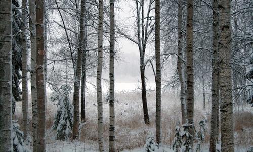 Winter is a time of regeneration: we'll miss it when it's gone | Aeon