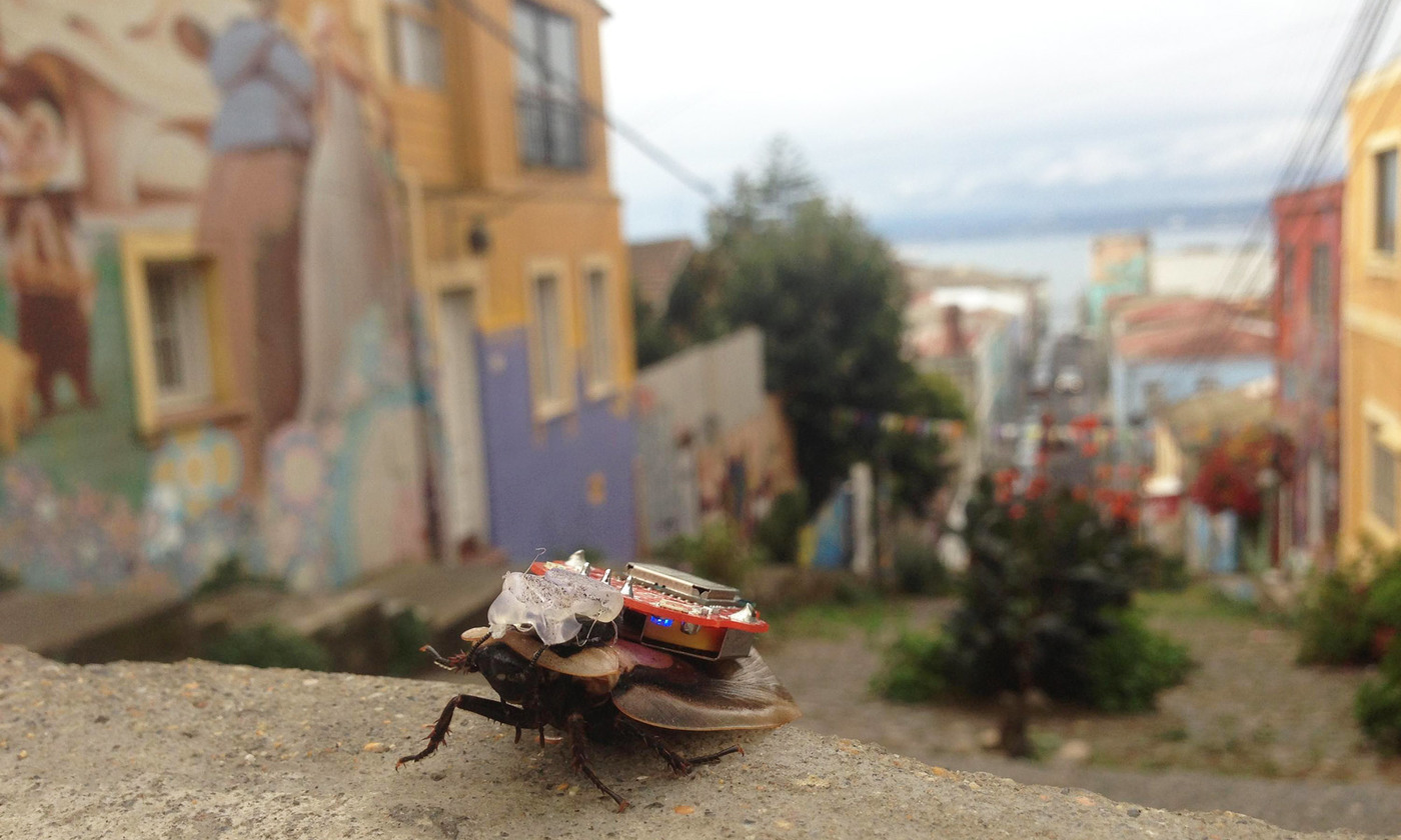 I, cockroach | Aeon