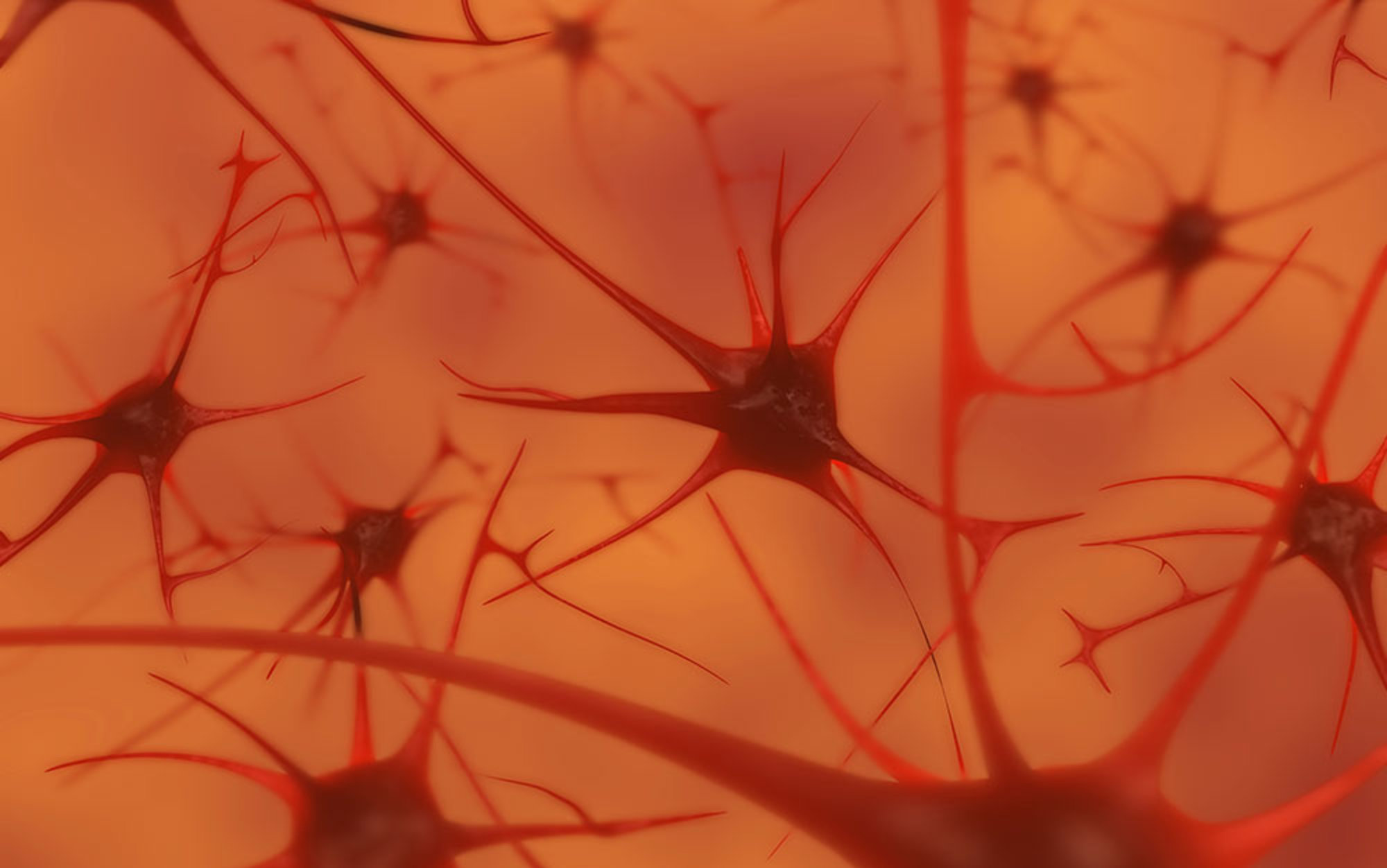 neuron soup?
