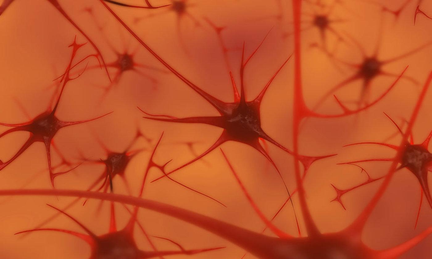 The empty brain | Aeon