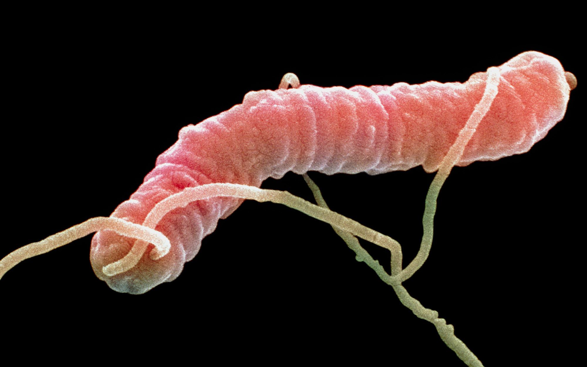 Microbes have no morals   Aeon