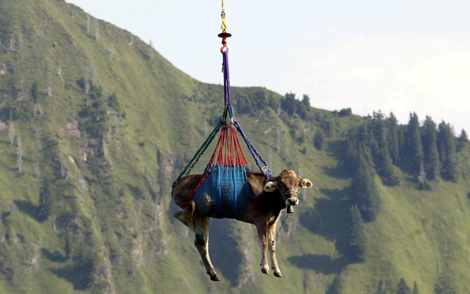 Swiss Flying Cows Is This The Future Aeon Essays