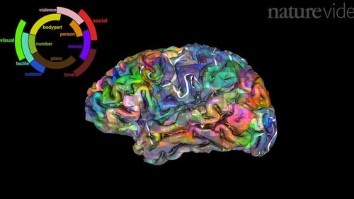 Card the brain dictionary main