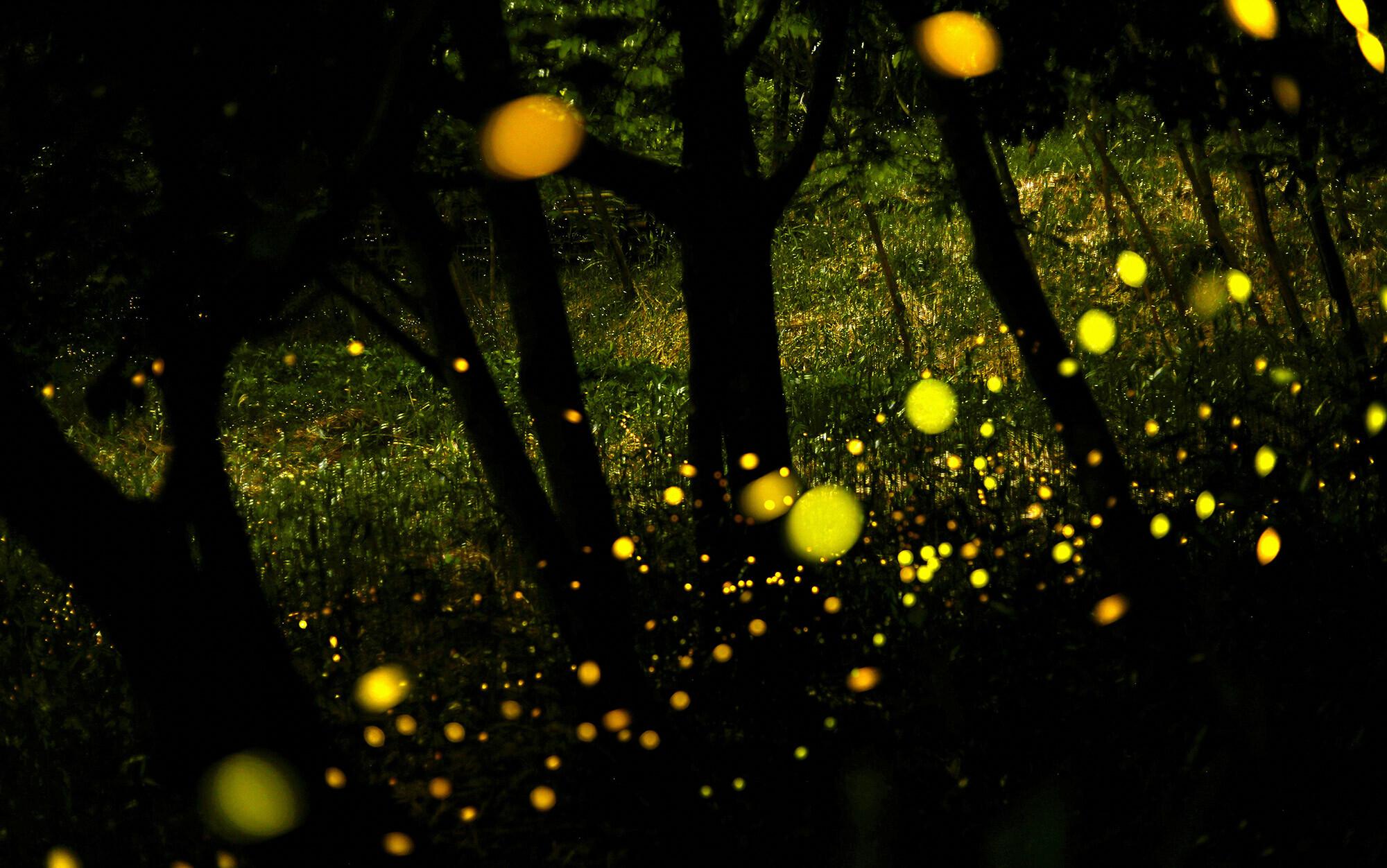 Living orbs of light | Aeon
