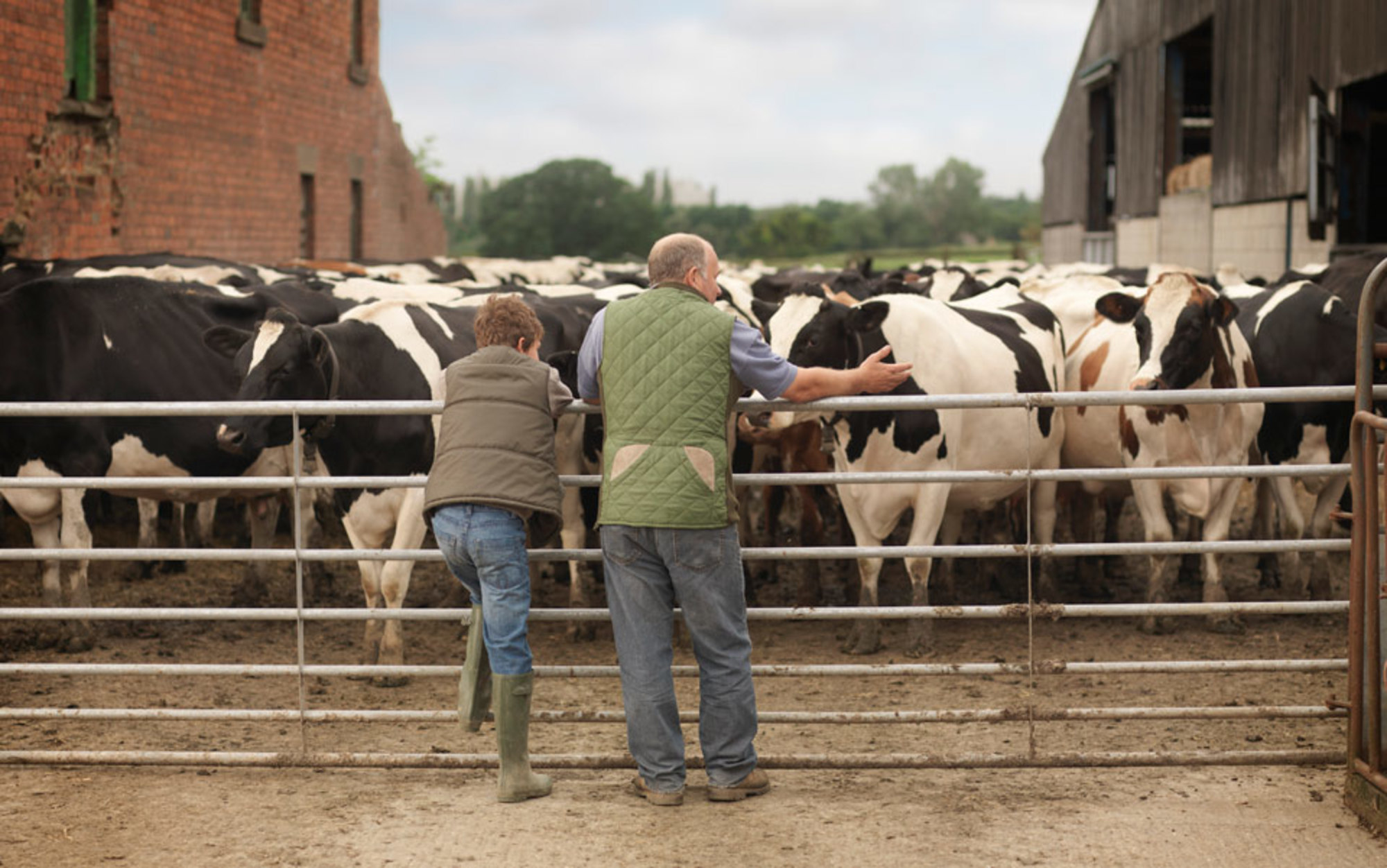 essay on cattle farming Agriculture speech topics for informative or persuasive public speaking engagements including 60 general agro education subjects and 20 farming theses.